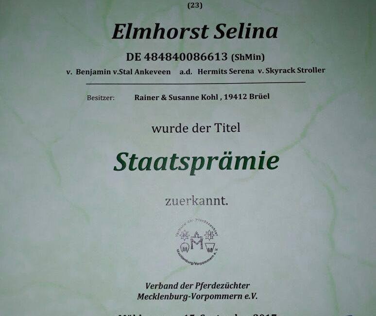 Elmhorst Selina bereichert nun unsere Zucht